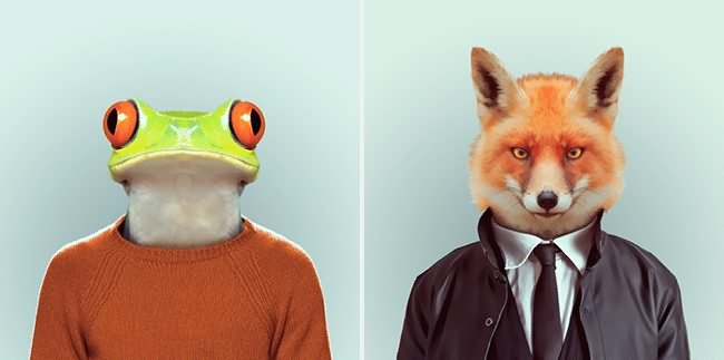 Animals Fashion